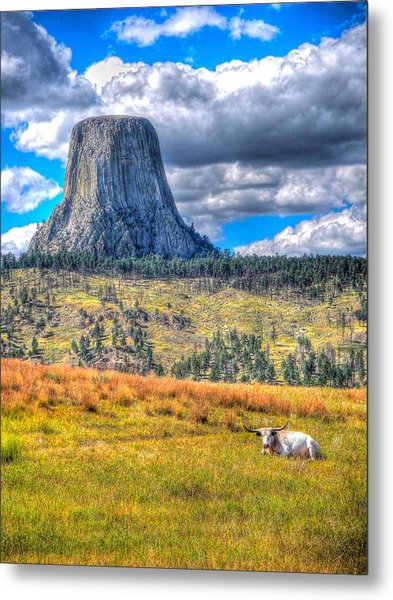 Longhorn At Devils Tower Metal Print