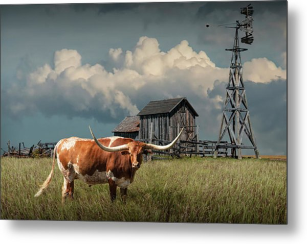 Longhorn Steer In A Prairie Pasture By Windmill And Old Gray Wooden Barn Metal Print