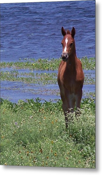 Look At Me Metal Print by Lilly King