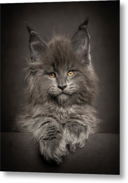 Look At Me Metal Print