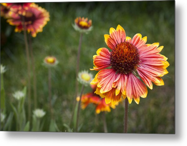 Look At What The Rain Gave Metal Print by Karen LeGeyt