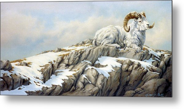 Look Of  Defiance Metal Print by Kathleen  V  Butts