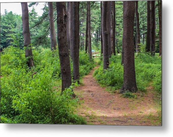 Look Park Nature Path Metal Print