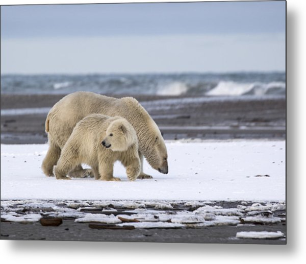 Looking Back In The Arctic Metal Print