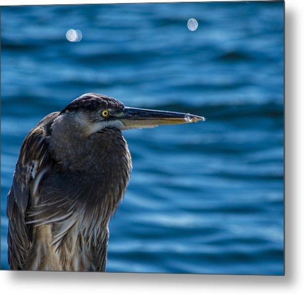 Looking For Lunch Metal Print