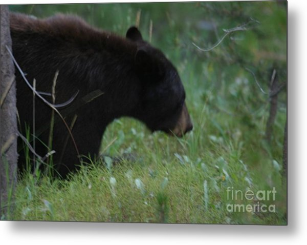 Looking For Lunch Metal Print by Robert Torkomian