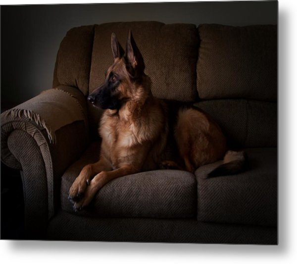 Looking Out The Window - German Shepherd Dog Metal Print