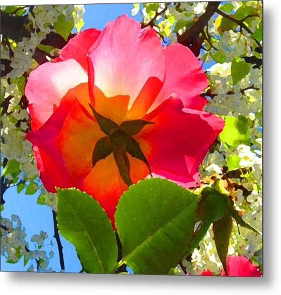Looking Up At Rose And Tree Metal Print