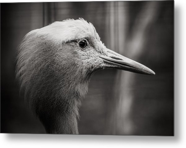 Lookout Metal Print by Angela Aird