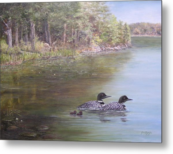 Loon Family 1 Metal Print