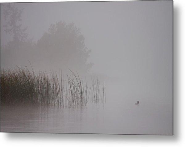 Loon In Morning Fog Metal Print