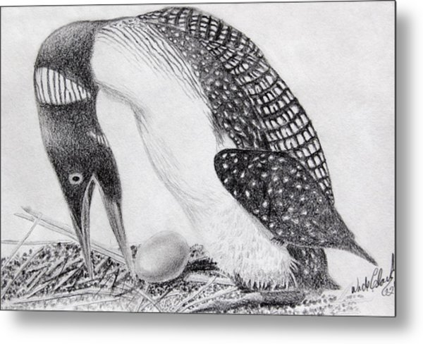 Metal Print featuring the drawing Loon Mother by Wade Clark