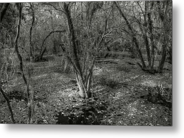 Loop Road Swamp #3 Metal Print