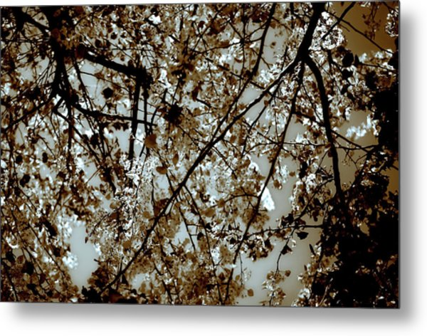 Branch Two Metal Print