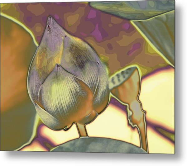 Lotus Dreaming 5 Metal Print