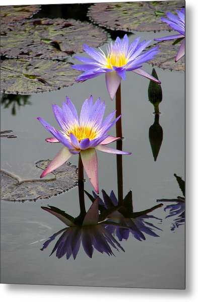 Lotus Reflection 4 Metal Print