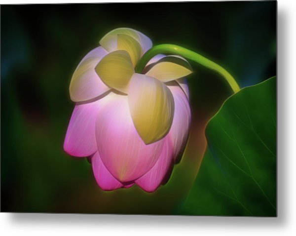 Lotus, Upside Down  Metal Print