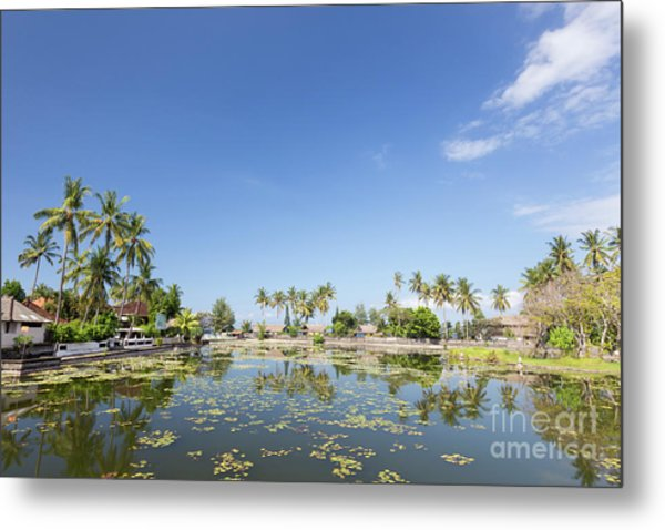 Lotus Water Lilies Growing In The Lagoon At Candidasa, Bali, Ind Metal Print by Roberto Morgenthaler