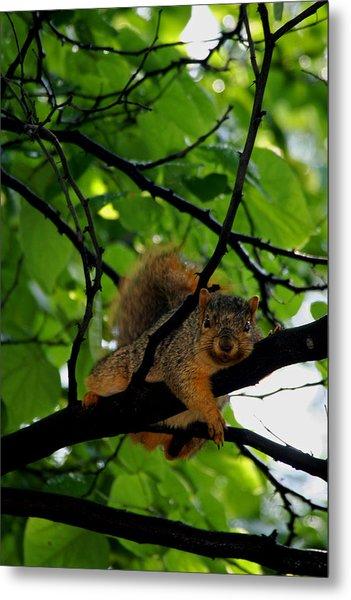 Lounge Squirrel Metal Print by Martin Morehead