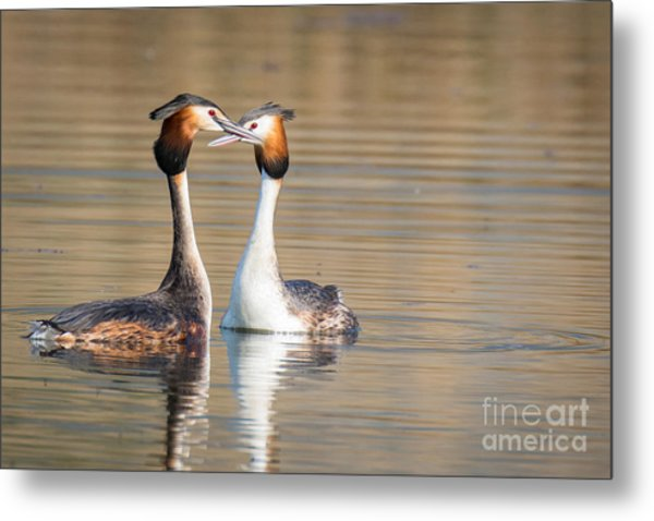 Love Couple Metal Print