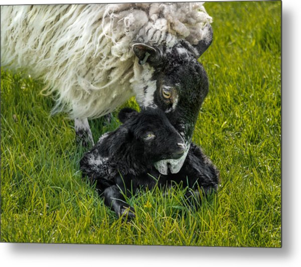 Just Born Metal Print