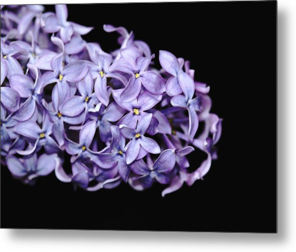 Love In Lilac Metal Print