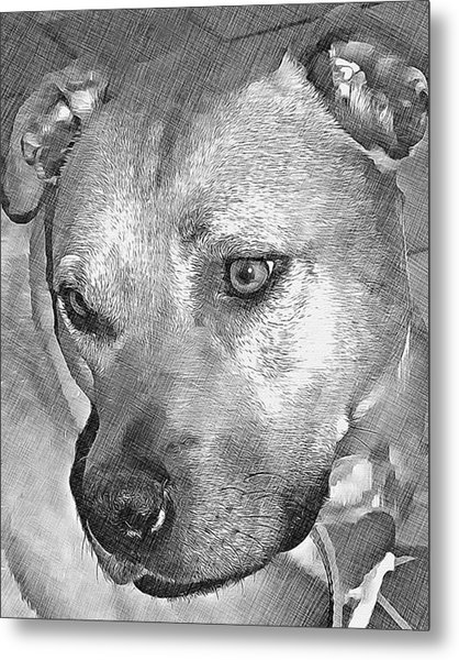 Lovely Dog Metal Print