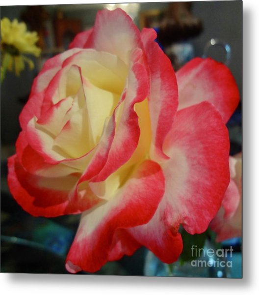 Lovely Rose Metal Print