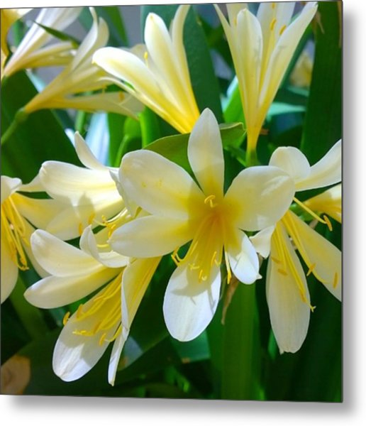 Lovely White And Yellow #flowers Metal Print