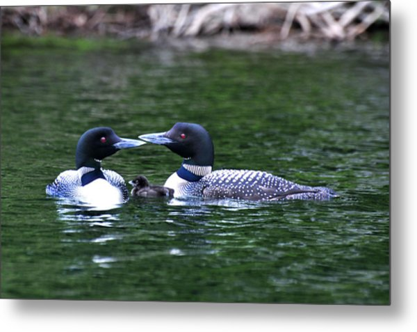 Loving Loon Parents Metal Print