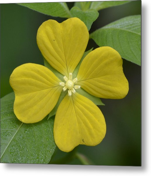 Lucky Four Leaf Flower Metal Print