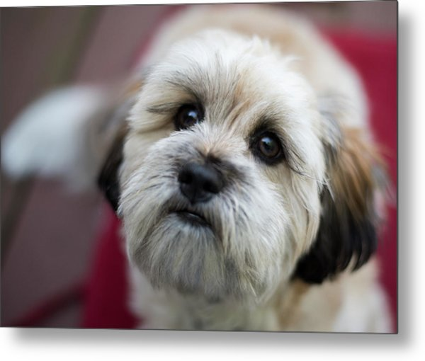 Lucy 2 Metal Print