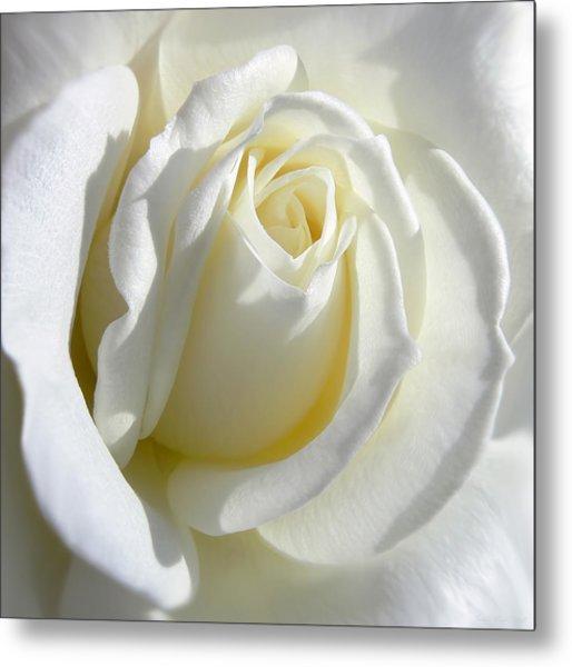 Luminous Ivory Rose Metal Print