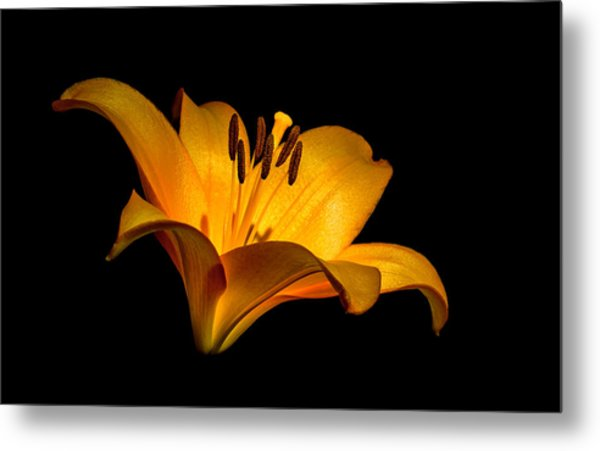 Luminous Lilly Metal Print