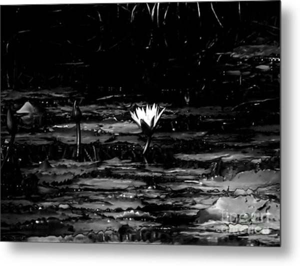 Luminous Water Lily  Metal Print