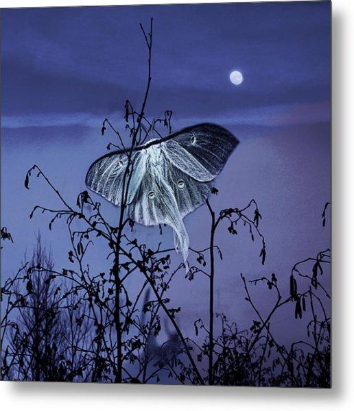 Luna Nights Metal Print