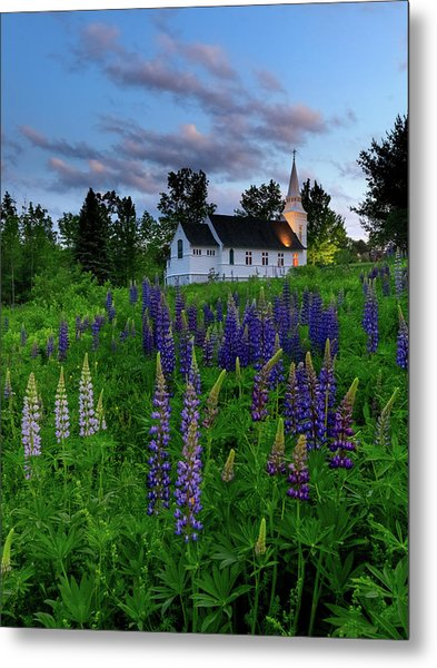 Lupines By The Church Metal Print