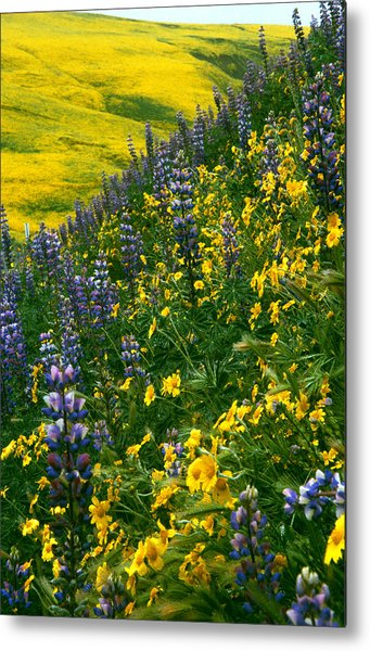Lupins And Daisys Metal Print