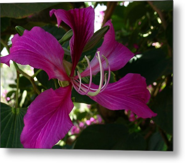 Lure Of The Tropics Metal Print by James Temple