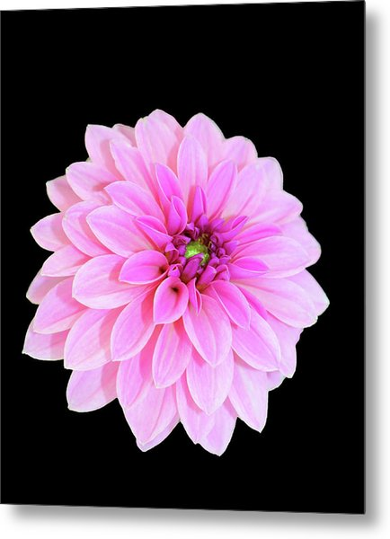 Luscious Layers Of Pink Beauty Metal Print