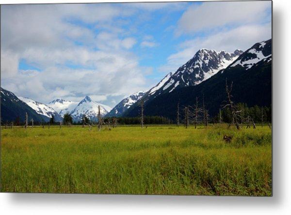 Lush Meadow In Alaska Metal Print