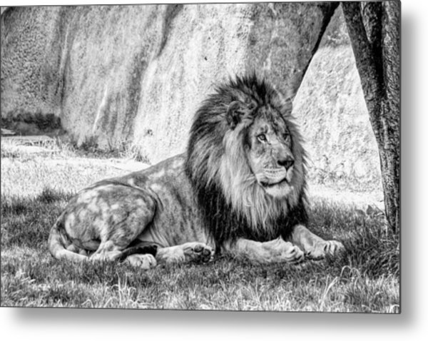 Lyin' In The Shade Metal Print