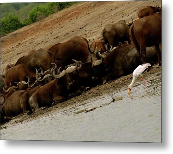 Lying By The River Bed Metal Print