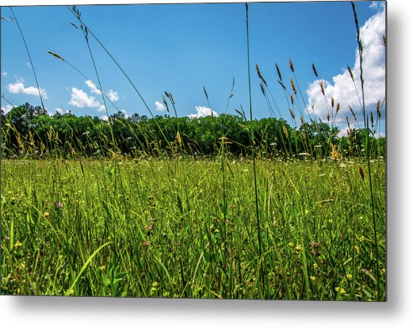 Lying In The Grass Metal Print