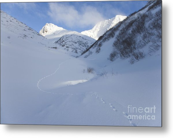 Lynx Tracks In A Mountain Pass Metal Print by Tim Grams