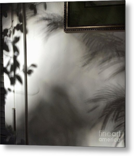 Lysiloma Shadows Metal Print