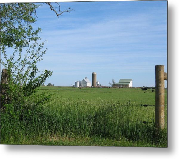 Metal Print featuring the photograph M Angus Farm by Dylan Punke
