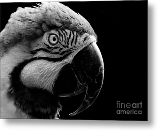 Macaw Parrot Portrait Black And White Metal Print