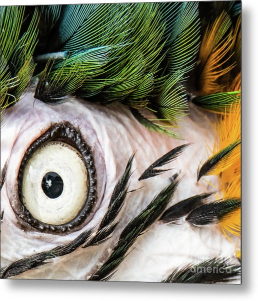 Macaw Up Close And Personal Metal Print