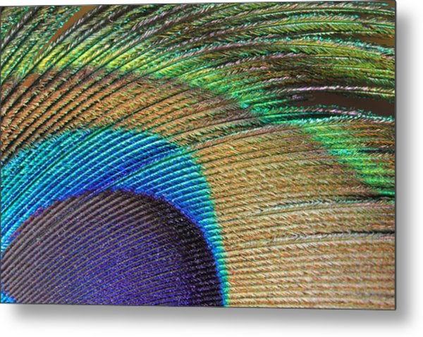 Macro Peacock Feather Metal Print